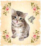 Gattino lanuginoso con le rose e la farfalla royalty illustrazione gratis