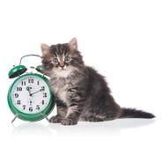 Gattino lanuginoso sveglio Fotografia Stock Libera da Diritti