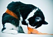 Gattino legato nell'arco Fotografie Stock Libere da Diritti