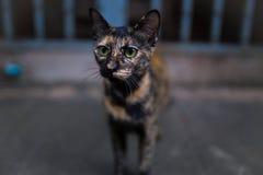 Gattino a lungomare Fotografia Stock