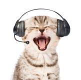 Gattino miagolante con la cuffia avricolare del telefono Su fondo bianco Fotografie Stock Libere da Diritti