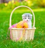 Gattino minuscolo che si siede in un canestro con le bugne di lana colorata Fotografia Stock Libera da Diritti