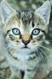 Gattino molle Fotografia Stock Libera da Diritti