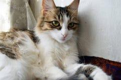 Gattino molto sveglio sulla finestra fotografie stock libere da diritti