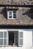 Gattino nei piccioni di sorveglianza della finestra fotografie stock libere da diritti