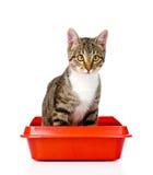 Gattino nel gatto di plastica rosso della lettiera Isolato su priorità bassa bianca Immagini Stock