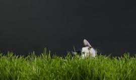 Gattino nel germe di grano Immagini Stock Libere da Diritti