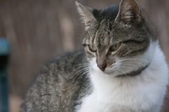 Gattino nel giardino fotografia stock