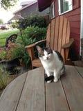 Gattino nel giardino Fotografie Stock
