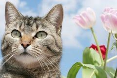 Gattino nel giardino di fiore Immagini Stock