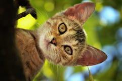 Gattino nell'albero che guarda giù fotografie stock