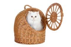 Gattino nell'elemento portante del rattan Immagini Stock