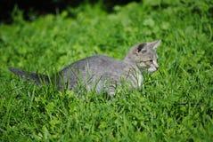 Gattino nell'erba Fotografia Stock Libera da Diritti