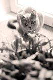 Gattino nella stanza Fotografia Stock