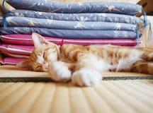 Gattino nella stanza di tatami Fotografie Stock Libere da Diritti