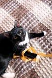 Gattino nero fotografie stock