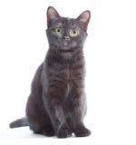 Gattino nero Fotografia Stock