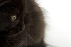 Gattino nero Fotografia Stock Libera da Diritti