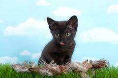 Gattino nero che lecca le piume di uccello delle labbra in erba immagine stock libera da diritti