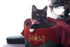 Gattino nero in contenitore di regalo di Natale su bianco Fotografia Stock Libera da Diritti