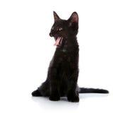 Gattino nero di sbadiglio fotografie stock libere da diritti