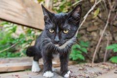 Gattino nero divertente grandangolare Fotografia Stock
