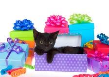 Gattino nero nei regali di compleanno Fotografia Stock Libera da Diritti