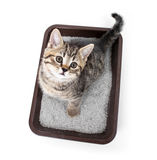 Gattino o gatto in contenitore di vassoio della toilette con la vista superiore della lettiera assorbente fotografia stock libera da diritti