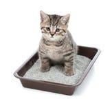 Gattino o piccolo gatto in contenitore di vassoio della toilette con la lettiera Immagini Stock Libere da Diritti