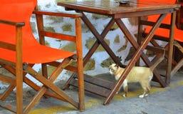 Gattino osservato bello blu Fotografie Stock