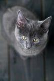 Gattino osservato da sopra Immagini Stock