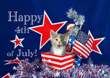 Gattino patriottico del calicò Immagini Stock