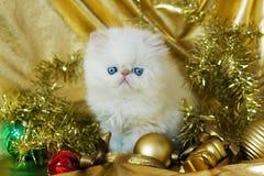 Gattino persiano bianco Fotografia Stock Libera da Diritti