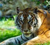 Gattino piacevole Fotografie Stock