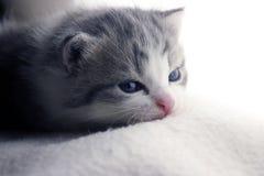 Gattino pigro Fotografie Stock Libere da Diritti
