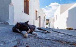 Gattino pigro di sonno che si trova sul calore di pietra di giorno della via Fotografia Stock