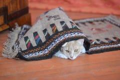 Gattino rosso Immagini Stock