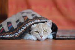 Gattino rosso Immagini Stock Libere da Diritti