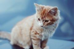 Gattino rosso adorabile fotografie stock