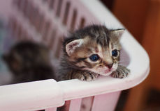 Gattino rosso appena nato Fotografia Stock Libera da Diritti