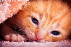 Gattino rosso appena nato Fotografie Stock Libere da Diritti
