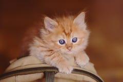 Gattino rosso sveglio che si siede sulla borsa Fotografia Stock Libera da Diritti
