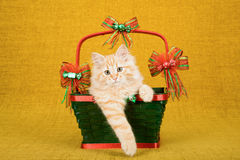 Gattino rosso di Tabby Siberian Forest Cat che si siede dentro il canestro verde di Natale sul fondo dell'oro Immagine Stock