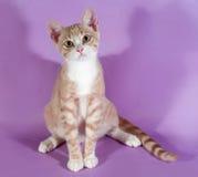 Gattino rosso e bianco che si siede sulla porpora Immagini Stock Libere da Diritti