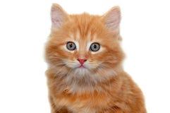 Gattino rosso realmente sveglio 3 Fotografia Stock Libera da Diritti