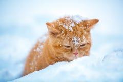 Gattino rosso sveglio che si siede nella neve immagini stock libere da diritti
