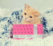Gattino rosso sveglio che si siede vicino alla scatola attuale fotografia stock libera da diritti