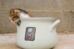 Gattino schioccante fotografie stock libere da diritti