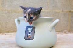 Gattino schioccante fotografia stock