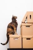 gattino scoperto Fotografie Stock Libere da Diritti